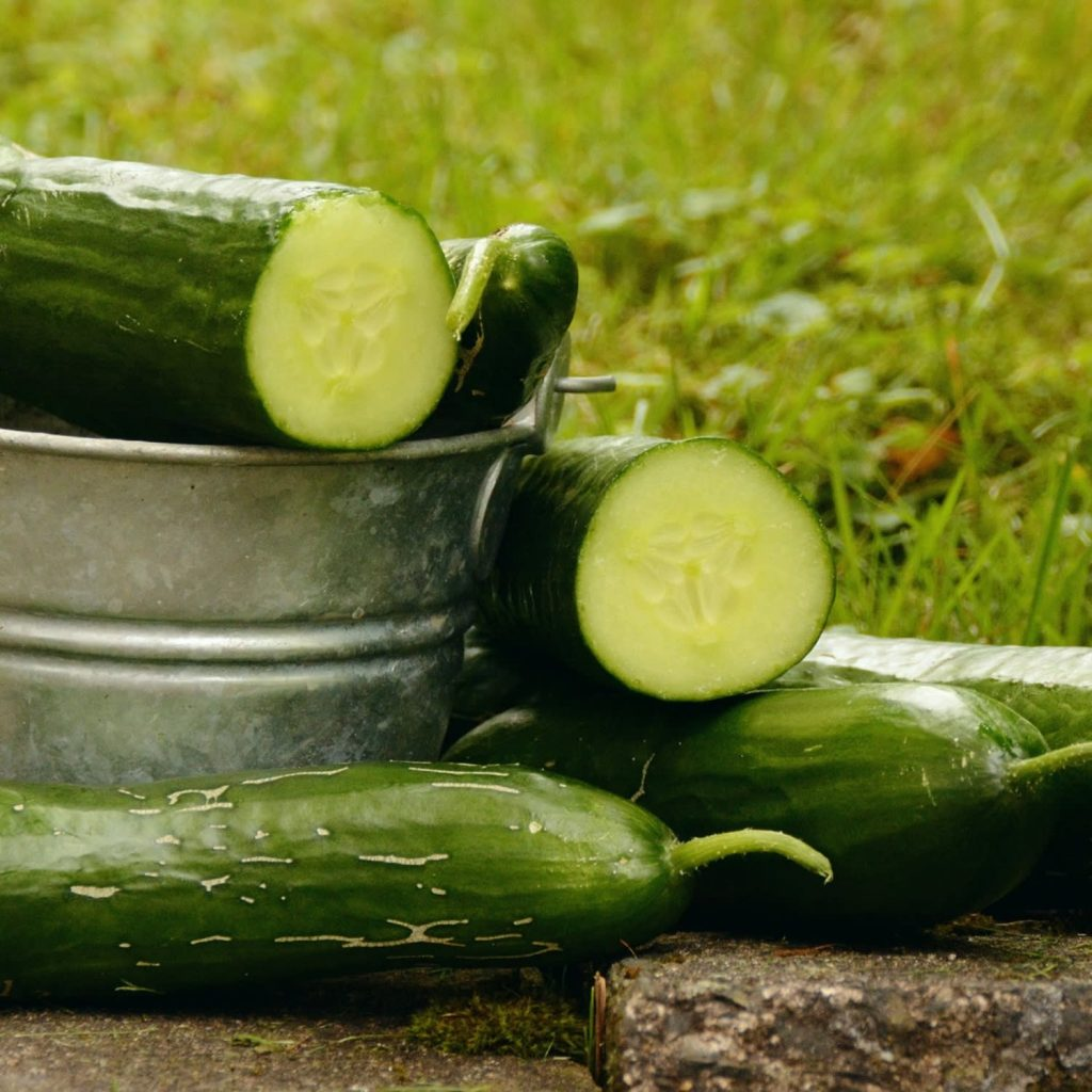 some cucumbers in a metal pot next to a green field